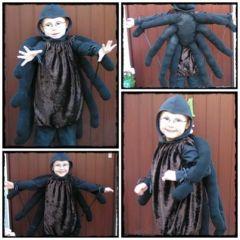 Spinnen Collage 2